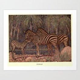 Vintage Zebra Painting (1909) Art Print