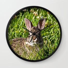 Young Cottontail Rabbit Wall Clock