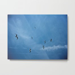 Birds of a Feather (B2) Metal Print