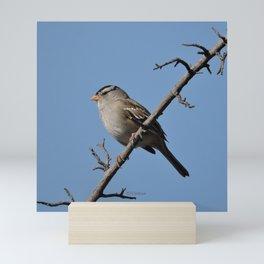 A White-Crowned Sparrow Eyes the Botanic Garden Mini Art Print