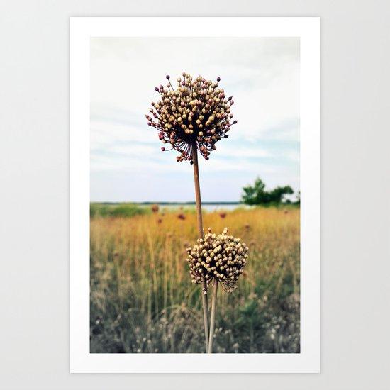 "Yorktown ""Onion"" Art Print"