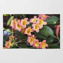 Tangerine Beauty Cross Vine Cascade Rug