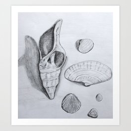 Sea Shells Pencil Drawing Art Print