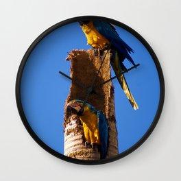 Arara Wall Clock