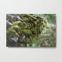 Irish Forest Metal Print
