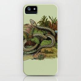 Snake Wildlife Illustration iPhone Case