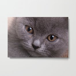 british cat Metal Print