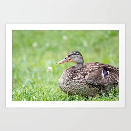 Mrs. Duck Art Print
