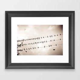 Freefly Framed Art Print