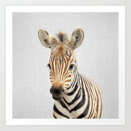 Baby Zebra - Colorful Art Print