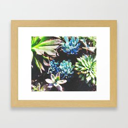 So many succulents, so little time. Framed Art Print