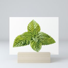 Mint Lamiaceae Labiatae deadnettle sage aromatic culinary herbs Mini Art Print