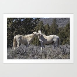 Wild Horses with Playful Spirits No 2 Art Print