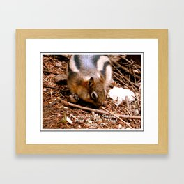 Lord Provides Squirrel Framed Art Print
