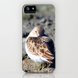 Watercolor Bird, Least Sandpiper 02, Janes Island, Maryland iPhone Case
