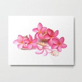 Frangipani blooms on sea shells Metal Print