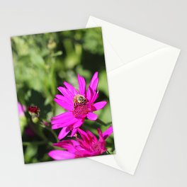 Beehave Stationery Cards