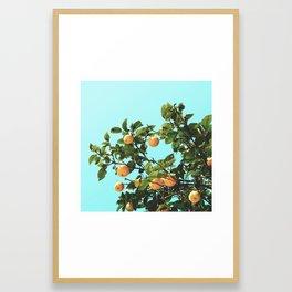 Summer Orange Tree Framed Art Print