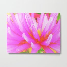 Fiery Hot Pink and Yellow Cactus Dahlia Flower Metal Print
