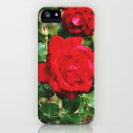 Red roses by Giada Ciotola iPhone Case