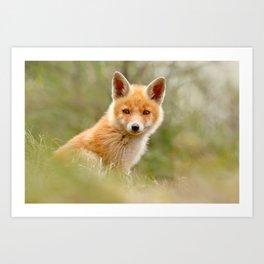 The Face of Innocence .:. Red Fox Kit Art Print