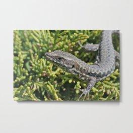 Lizard animal under the summer sunlight on green  Metal Print
