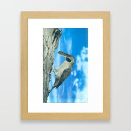 Banded Woodpecker Framed Art Print