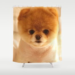 Adorable Pomeranian Puppy Shower Curtain