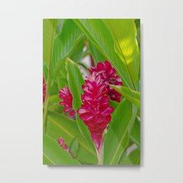 Alpinia purpurata Jungle King Red Ginger Tropical Flowers Lāhainā Maui Hawaii Metal Print