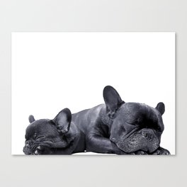 sleeping frenchies Canvas Print