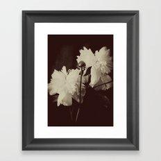 White Peony Framed Art Print