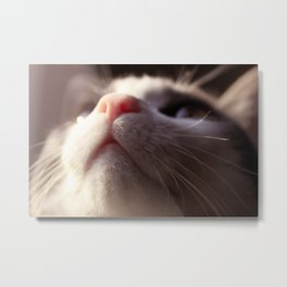 Close to Cat Metal Print