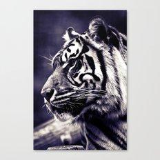 Sumartran Tiger  Canvas Print