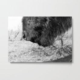 Buffalo Beard Metal Print