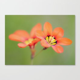 Bloomin Pretty Canvas Print