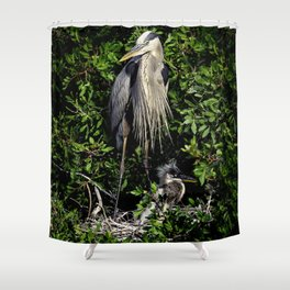 Great Blue Heron on the nest with fledgling Shower Curtain