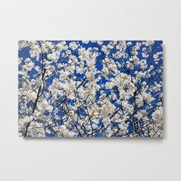 Spring Blossom V Metal Print