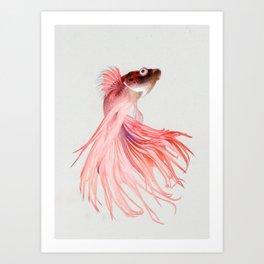 Betta splendens Art Print