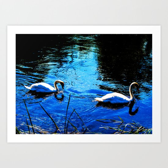 Swanning About Art Print