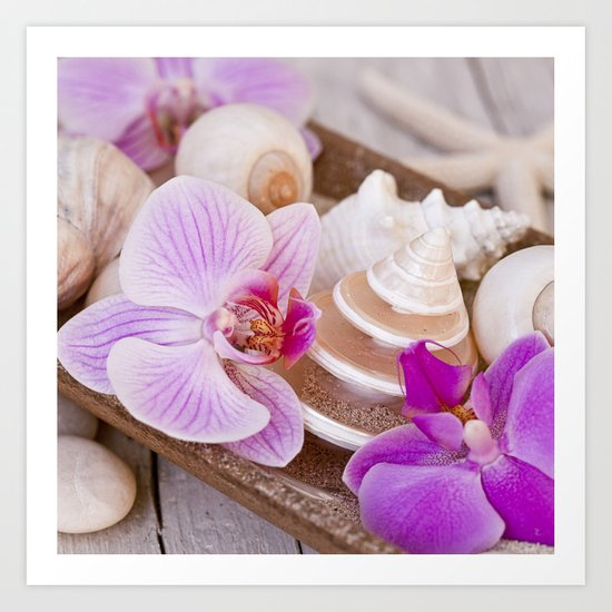 Maritime and pink Orchid Still Life Art Print