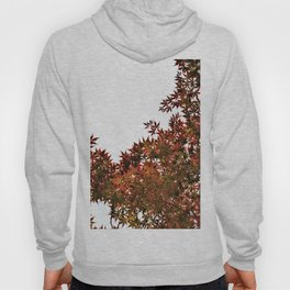 Changing of Seasons Hoody