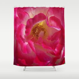 A Rosy Glow - Double Delight Rose Shower Curtain