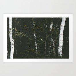 Holme Woods 8 Art Print