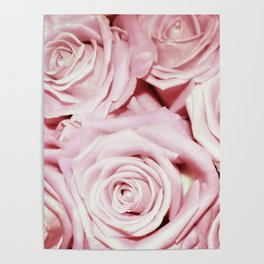 Beautiful bed of pink roses - Floral Rose Flowers Poster