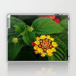 Red and Yellow Lantana Flower and Green Leaves Laptop & iPad Skin