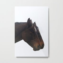 Twin Horses Photography Print Metal Print