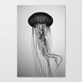 Jellyfish Black and White Canvas Print
