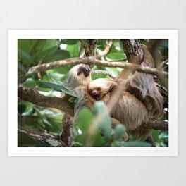 Yawning Baby Sloth - Cahuita Costa Rica Art Print
