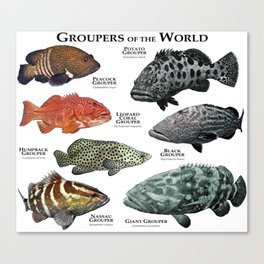 Groupers of the World Canvas Print
