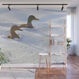 Ducks Swimming in Snow Wall Mural